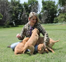 Golden Retriever Puppy Wrangler